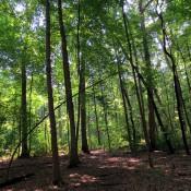 In Hartley Wood
