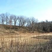 View toward Prairie Restoration hillside