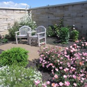 Early summer in the Rose & Fragrance Garden