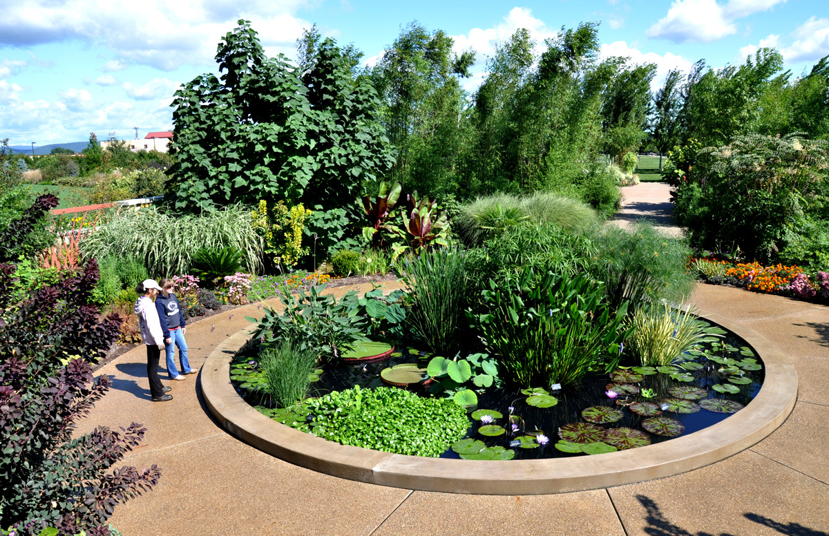Oasis Garden Lotus Pool Arboretum At Penn State