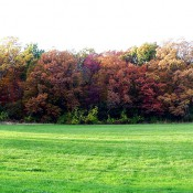 Woodlot-Fall-Color-from-Spaniers