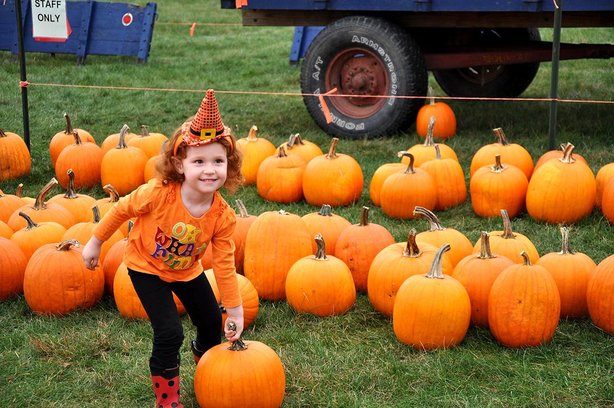 Pumpkin festival arboretum at penn state - Botanic gardens pumpkin festival ...