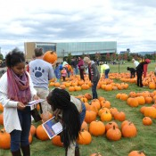 Many students and families look forward to choosing a pumpkin to carve for the contest each year.
