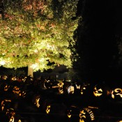 Lighted jack-o'-lanterns under the Hosler Oak