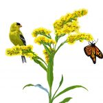 Goldenrod, goldfinch, monarch