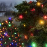 Arboretum-Colored lights in shrubs-Winter_Celebration